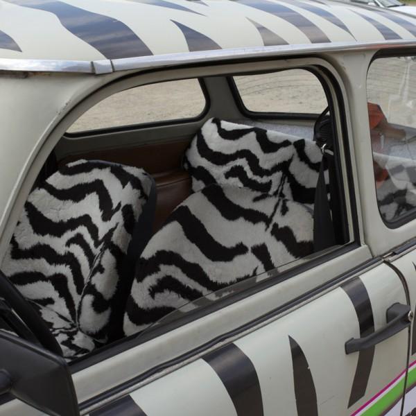 Zebra Trabant