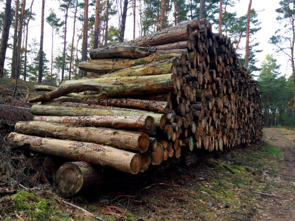 Wald bei Wandlitz